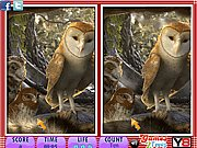 Thumbnail of 10 Differences - Legend of the Guardians