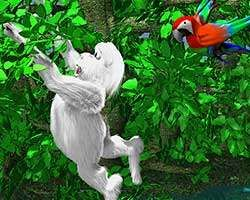 Thumbnail of Yeti Sports 8 - Jungle Swing