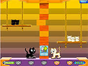 Swing Cat thumbnail