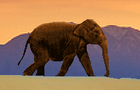 Thumbnail for Elephant Story