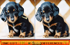 Thumbnail for Differences in Puppy Land