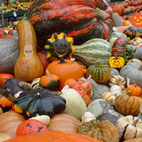 Hidden Objects-Pumpkin Show thumbnail