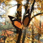 Thumbnail of Hidden Autumn Butterfly