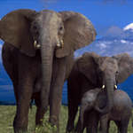 Wild Elephants-Find the Spot thumbnail