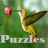 Puzzles with hummingbirds thumbnail