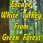 Escape White Turkey From Green Forest thumbnail