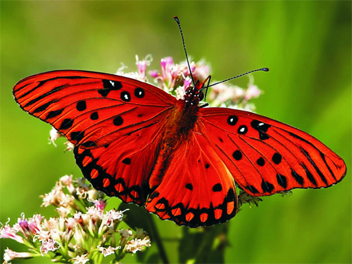 Nature Jigsaw Puzzle Butterfly thumbnail