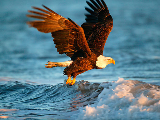 Animals Jigsaw Puzzle Eagle thumbnail